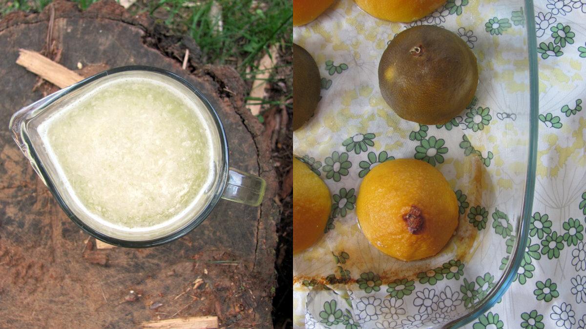 Lemoniada z pieczonych cytrusów