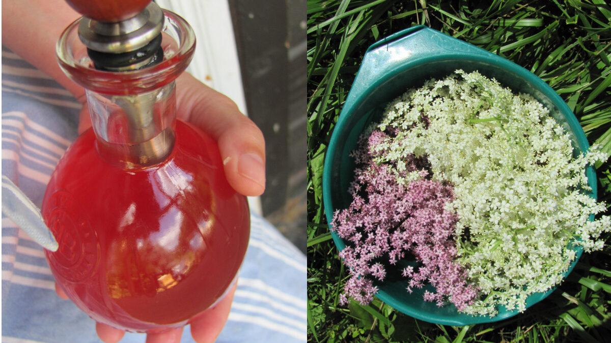 Zanim przekwitnie czarny bez: syrop i smażone kwiaty